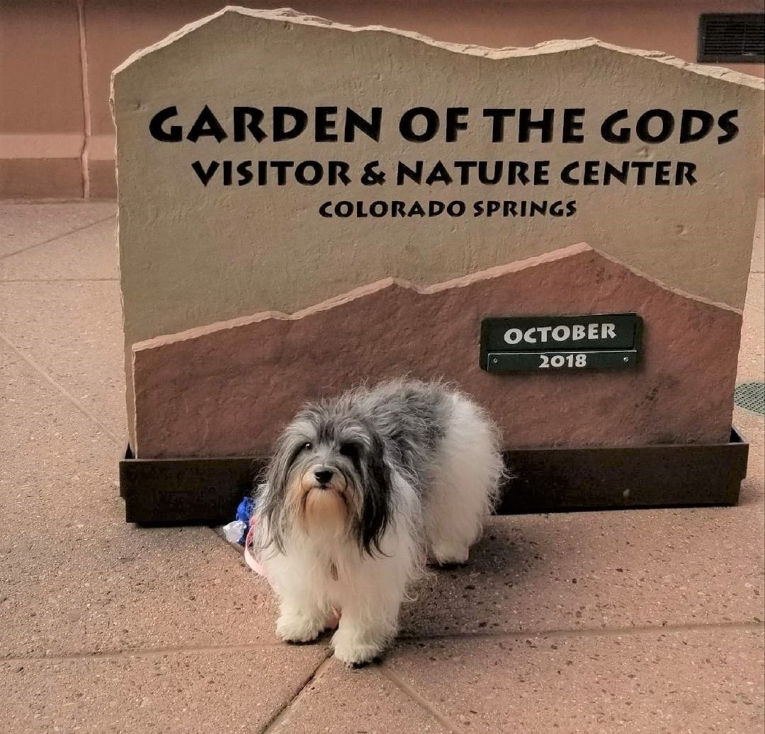 Great Lakes Cotons, breeder of Coton de Tulear pup in IL